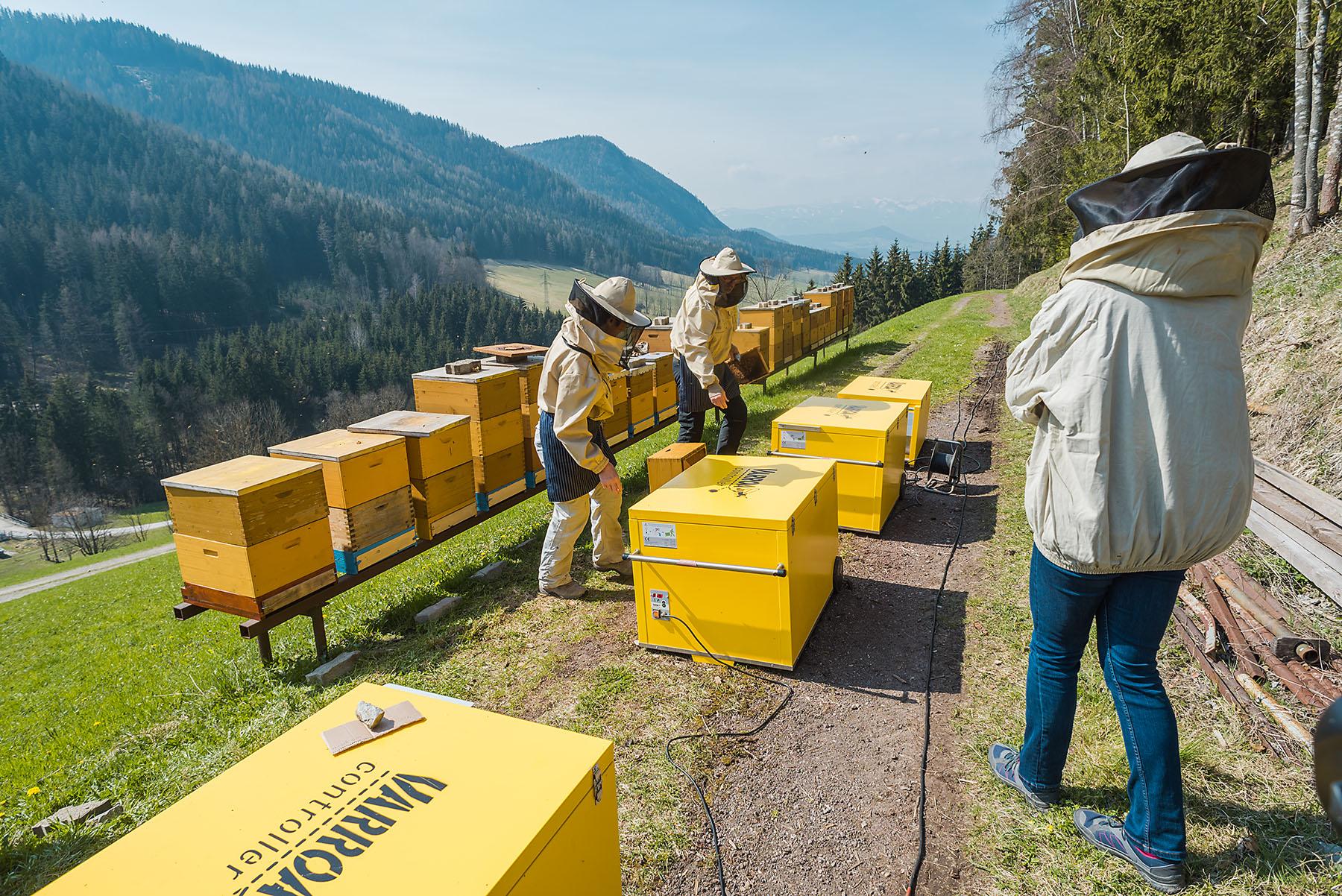 Jarné ošetrovanie včiel - workshop, včely - eventovy fotograf
